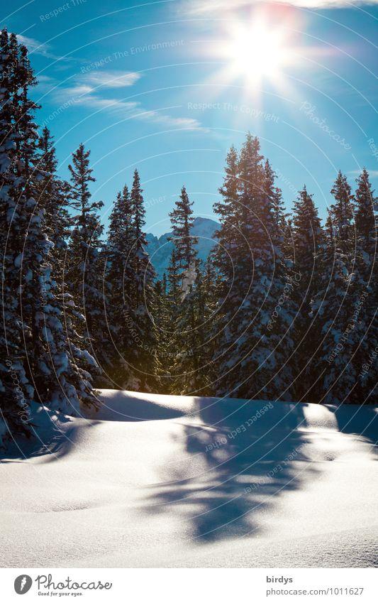 Winter Natur Landschaft Himmel Wolkenloser Himmel Sonne Sonnenlicht Schönes Wetter Schnee Tanne Wald Berge u. Gebirge leuchten ästhetisch Freundlichkeit frisch