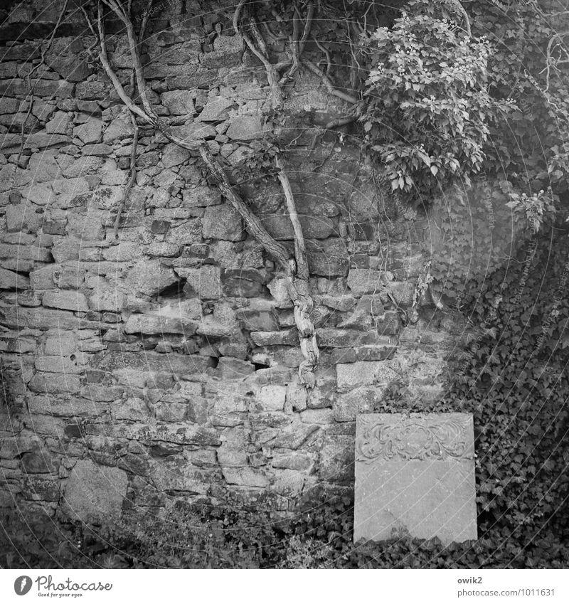 Epitaph Natur alt Pflanze Blatt ruhig Umwelt Wand Gras Hintergrundbild Mauer Stein Idylle Sträucher Vergänglichkeit Ewigkeit Hoffnung