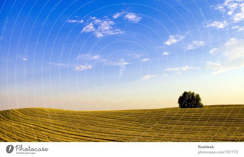 Feldstecher Wolken Baum gelb grün Sommer Himmel Landschaft blau Ernte hinterm Haus gleich links kein Mähdrescher da