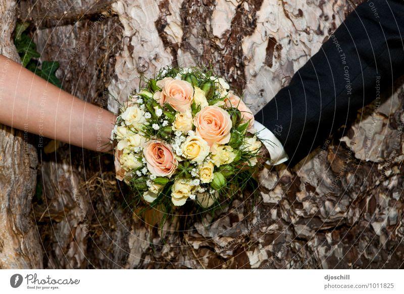 Hoch-Zeit-s-Foto Natur Pflanze schön Blume Freude Liebe Glück Holz Design ästhetisch Zeichen Hoffnung Grünpflanze