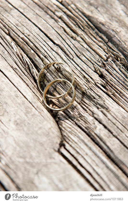 Wood u merry me? elegant Stil Design Glück Hochzeit Ring Holz Metall Gold Zeichen Liebe Warmherzigkeit Sympathie Zusammensein Verliebtheit Treue Romantik schön