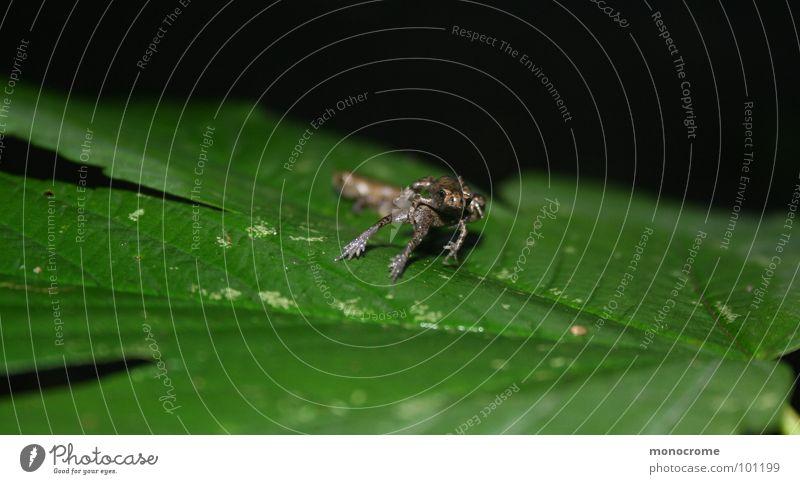 Gemeinsam durchs Leben springen... Natur grün Sommer klein springen Zusammensein Frosch Lurch Froschschenkel