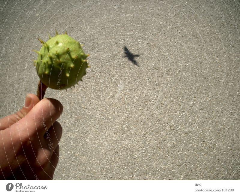 Lockmittel Vogel Hand ködern obskur Schatten Kastanienbaum Lockung fliegen