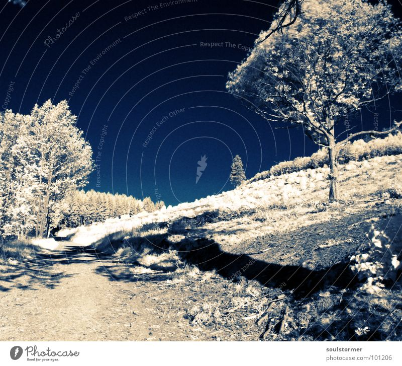 Schatten... Infrarotaufnahme Farbinfrarot Schwarzfilter Wolken schwarz weiß Holzmehl Gras Wiese Pflanze grün Baum Wald Waldrand Wäldchen obskur Infarot