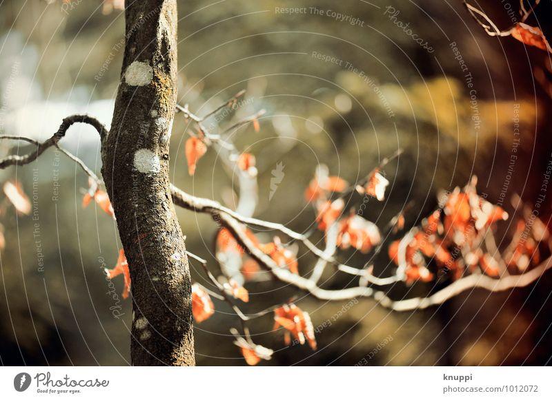 Herbst Umwelt Natur Pflanze Luft Wolkenloser Himmel Sonne Sonnenaufgang Sonnenuntergang Sonnenlicht Schönes Wetter Wind Baum Blatt Wildpflanze Park Wald