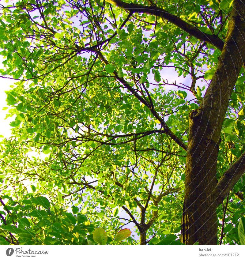 Unter dem Baum grün Sommer Blatt Wald Park braun Ast Baumkrone