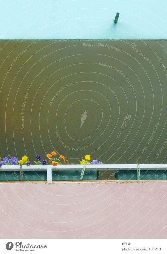 Blumenkasten Kasten blau weiß grün schön Pflanze Blume Einsamkeit Haus gelb Leben Graffiti grau Garten Traurigkeit Arme rosa