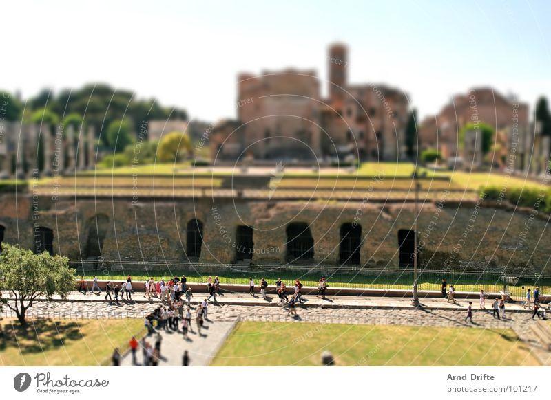 Mini-Forum Mensch grün Sommer braun klein Denkmal Ruine Wahrzeichen Surrealismus Tourist Italien Rom Miniatur Tilt-Shift
