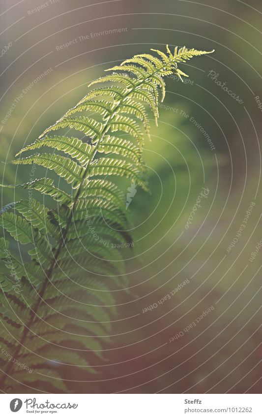 zwischen Farn und Traum Natur Pflanze schön grün Wald Umwelt Frühling Stimmung Wachstum zart verträumt Grünpflanze Wildpflanze Lichteinfall traumhaft