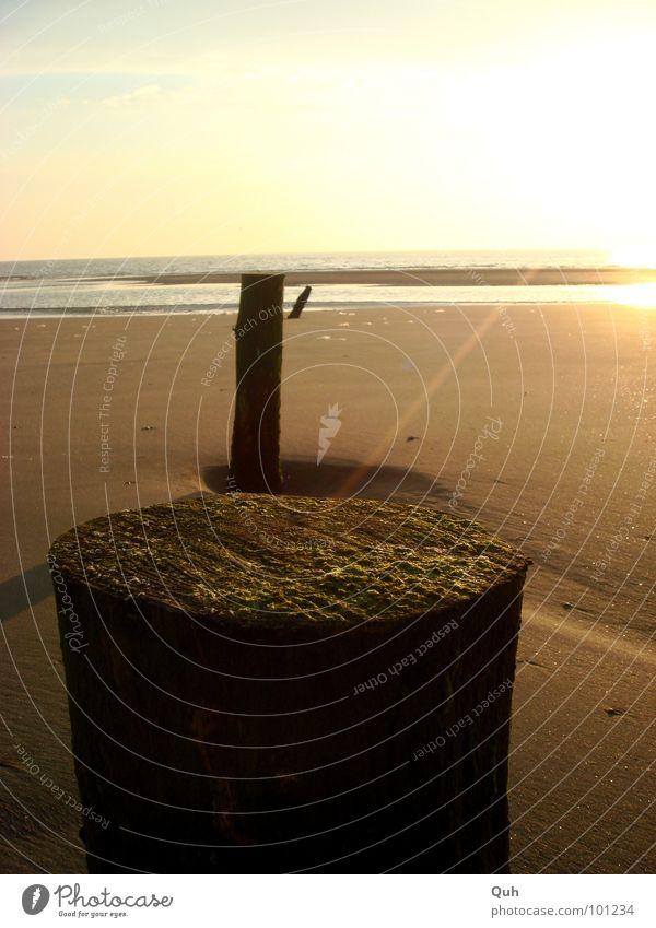 aus der Reihe tanzen Strand Meer Sonnenuntergang Licht Strahlung Holz Algen Sandbank Küste Abenddämmerung Pfosten See Ferien & Urlaub & Reisen Horizont Brandung