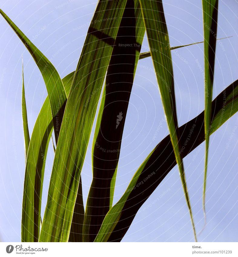 Gartenmonster lässt die Ohren hängen Himmel grün blau Gras Asien Vergänglichkeit China Monster