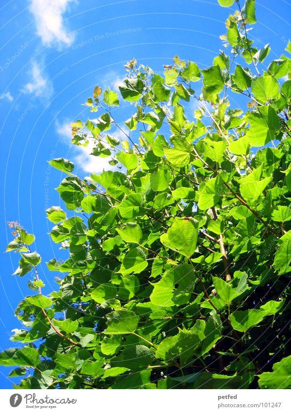 Im Garten Eden V Natur Himmel Baum grün blau Sommer Freude Wolken gelb Frühling Wetter Ast Baumstamm Gott Götter