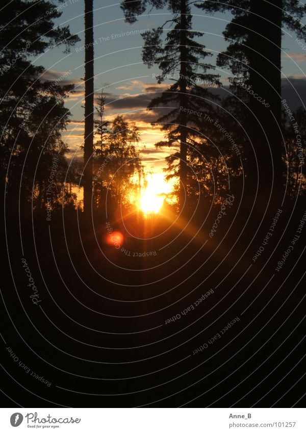 Finnish Sunset 2 Natur Himmel Baum Sonne schwarz Wolken Wald orange Romantik Abenddämmerung Finnland Abendsonne Leuchtkraft