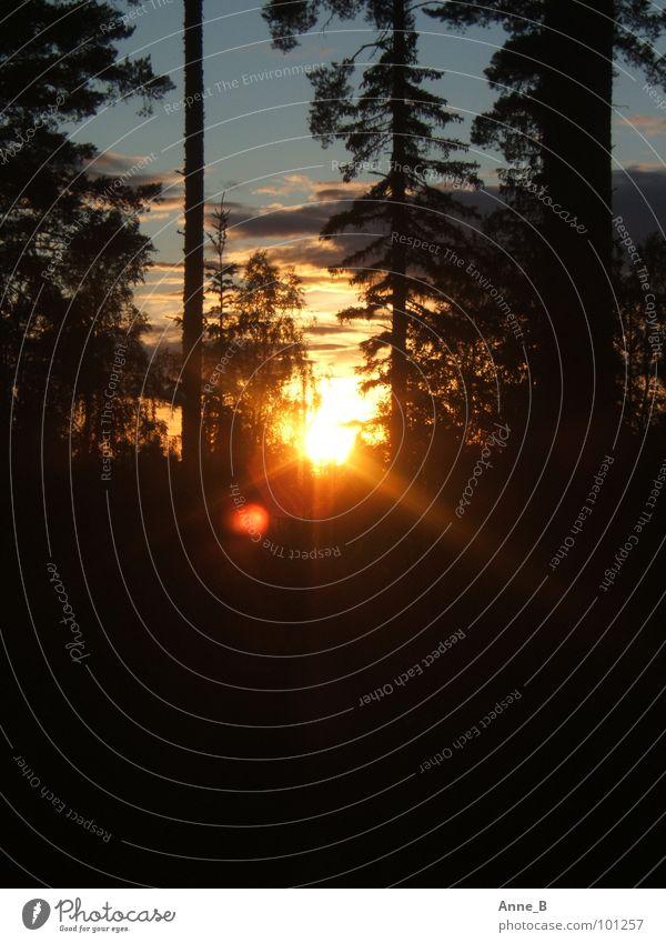 Finnish Sunset 2 Sonne Natur Himmel Wolken Baum Wald schwarz Romantik Finnland Sonnenuntergang orange Farbfoto Außenaufnahme Menschenleer Textfreiraum unten
