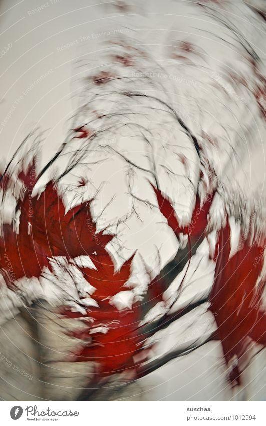 800 .. Umwelt Himmel Herbst Klima Sturm Pflanze Baum Blatt Dorf verrückt wild rot rotieren Dynamik drehen Politische Bewegungen Ast Farbfoto Außenaufnahme