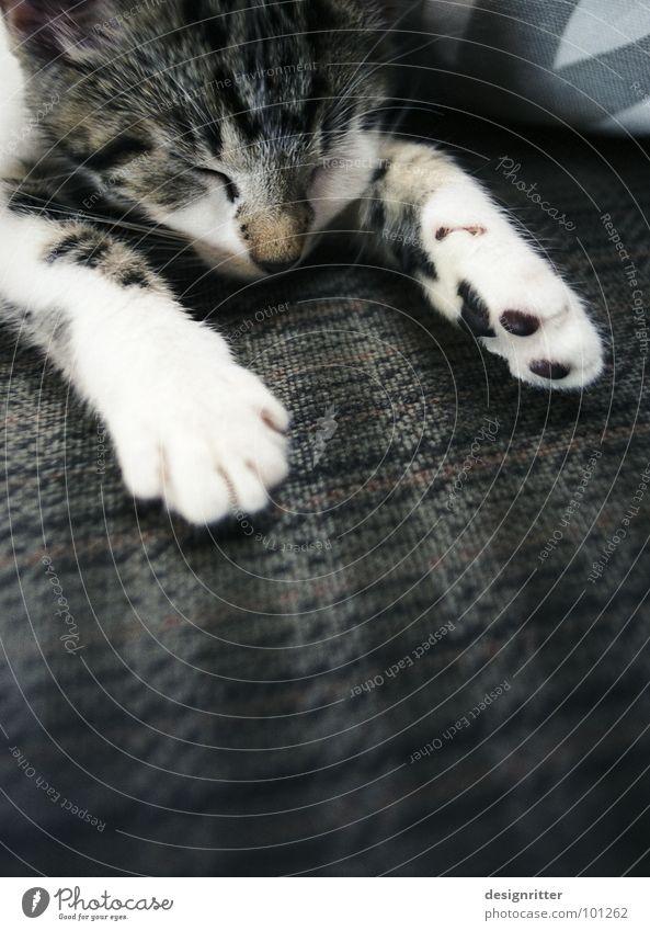 Lotta bei 30° C Katze Müdigkeit Erschöpfung schlafen Pfote Krallen Physik heiß niedlich süß klein Säugetier flau fertig Wärme