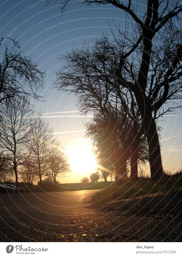 >*v*< verstrahlt Baum Asphalt Bordsteinkante Gegenlicht ländlich Gras Wiese vertraut Hoffnung Landschaft Natur Silhouette Sonne Wärme Perspektive Ferne Himmel