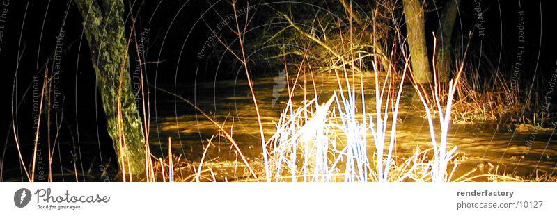 Leuchtgras Natur Wasser Baum Pflanze Gras Fluss Sträucher