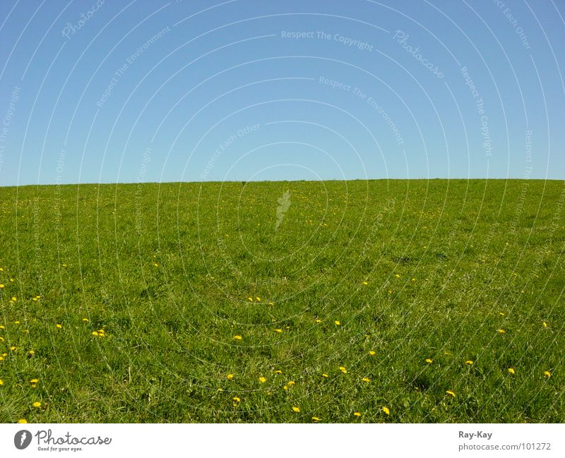 Am Rande des Horizonts Natur schön Himmel grün blau Wiese Gras Landschaft Horizont