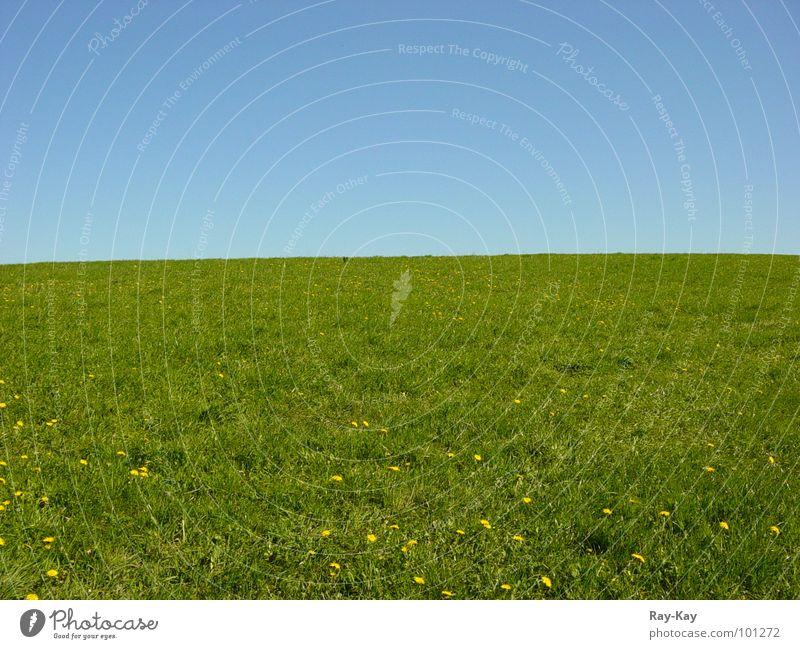 Am Rande des Horizonts Wiese Gras grün schön Himmel Natur Landschaft blau