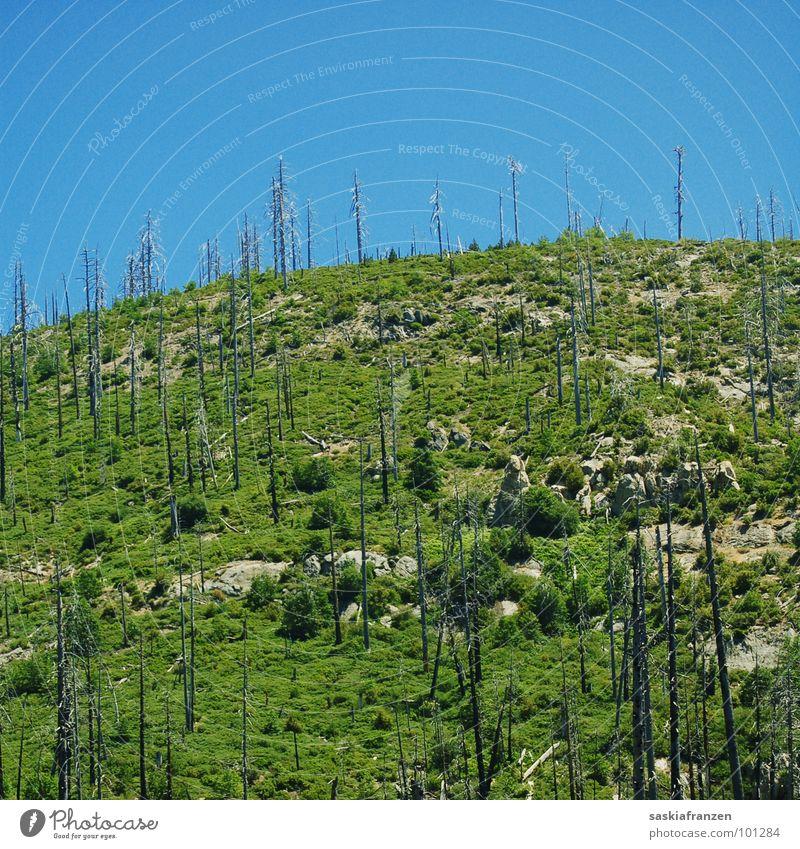Waldbrand. Natur Himmel grün blau Wiese Landschaft Brand gefährlich USA bedrohlich brennen Baumstamm Schönes Wetter Berghang Steigung