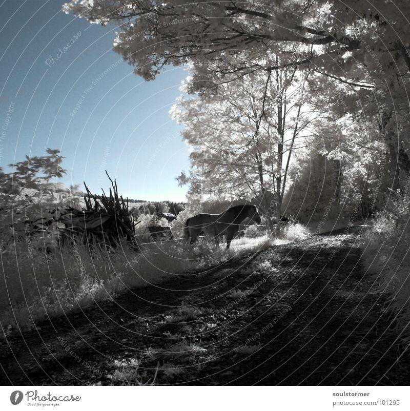 noch ein Pferd... Infrarotaufnahme Wiese Baum außergewöhnlich Jubiläum Zaun Wolken Farbinfrarot weiß Holzmehl Gras Wand Dach schwarz grau Neue Welt