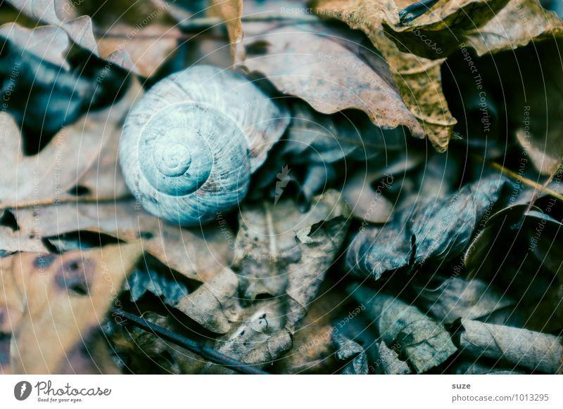 Es war einmal ... Winter Umwelt Natur Erde Herbst Blatt Tier Wildtier Schnecke 1 trocken Gefühle Stimmung Traurigkeit Trauer Tod Einsamkeit stagnierend