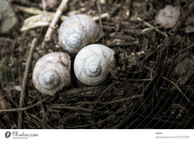 Hausarrest Umwelt Natur Tier Erde Herbst Wildtier Schnecke 3 Traurigkeit trocken braun Gefühle Stimmung Trauer Tod Einsamkeit stagnierend Überleben Verfall
