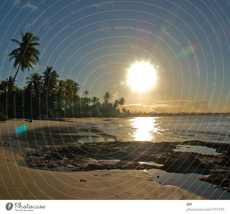 Jenseits von Jesolo Palme Palmenstrand Sonnenuntergang Traumstrand Strand Ferien & Urlaub & Reisen Sandstrand Meer Atlantik Brasilien Caipirinha Kokosnuss