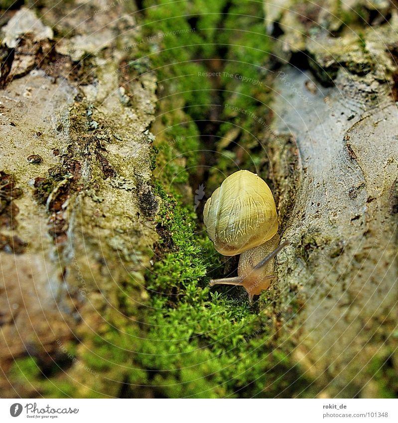 durch dies hohle Gasse muss sie kommen krabbeln schleimig Schneckenhaus langsam Baumstamm Fühler anbiedern grün Plagegeist Apfelbaum gelb Furche Zeitlupe
