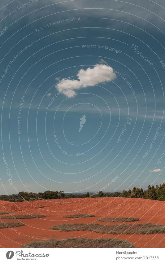 Lonely cloud Himmel blau Pflanze weiß Sommer Baum Einsamkeit rot Wolken Wärme klein Sand Erde Schönes Wetter Hügel trocken