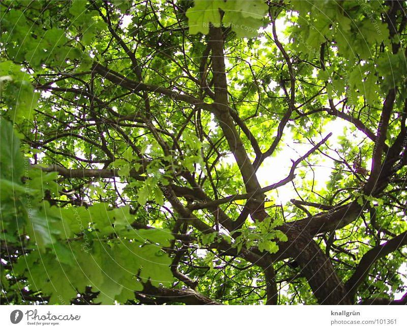 Blätterdach Baum grün Sommer Blatt braun Schutz Baumstamm Geäst Wetterschutz