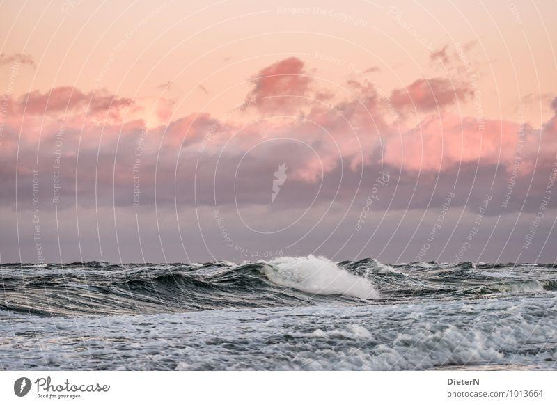 Welle Wasser Himmel Wolken rosa rot weiß Ostsee Horizont Wolkendecke Meer Wellen Schaum Farbfoto Außenaufnahme Menschenleer Textfreiraum oben Textfreiraum Mitte