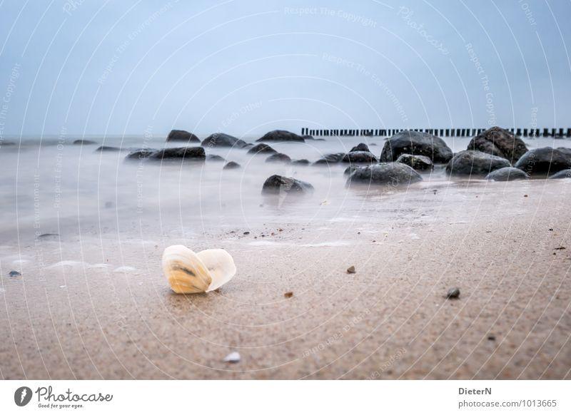 Fundstück Himmel Natur blau weiß Wasser Meer Landschaft Strand schwarz Küste Holz Stein Sand braun Felsen Horizont