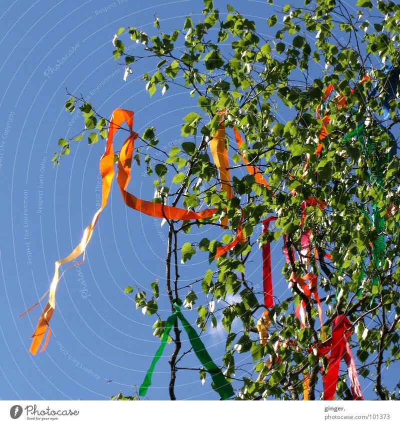 Maibaum Himmel Frühling Wind Baum Schmuck Zeichen blau grün Girlande flattern Luftschlangen Birke Baumkrone Wolkenloser Himmel Textfreiraum links Menschenleer