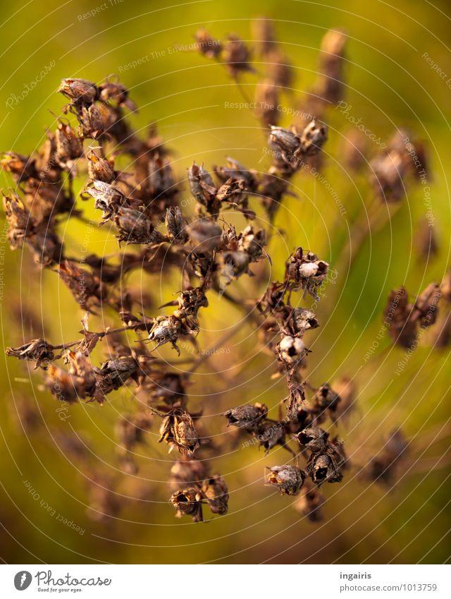 Winterliches sommerlich angehaucht Natur Pflanze grün Blume Tier Umwelt Blüte natürlich braun Stimmung Klima Glaube trocken Wiesenblume dehydrieren