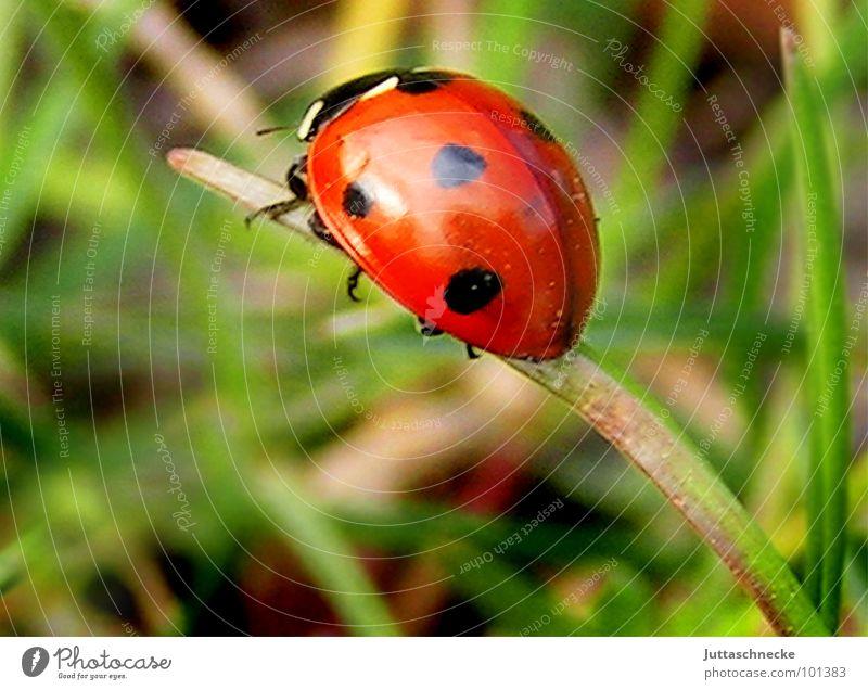Sackgasse grün rot Sommer Freude Gras Garten Glück orange fliegen süß Insekt Halm Käfer Marienkäfer 7 herzlich