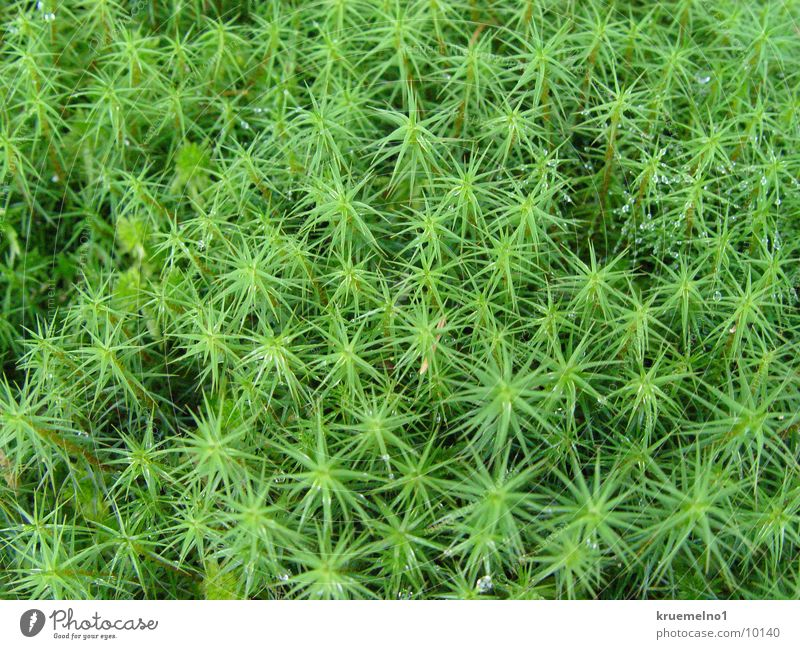 Moos grün Pflanze Makroaufnahme