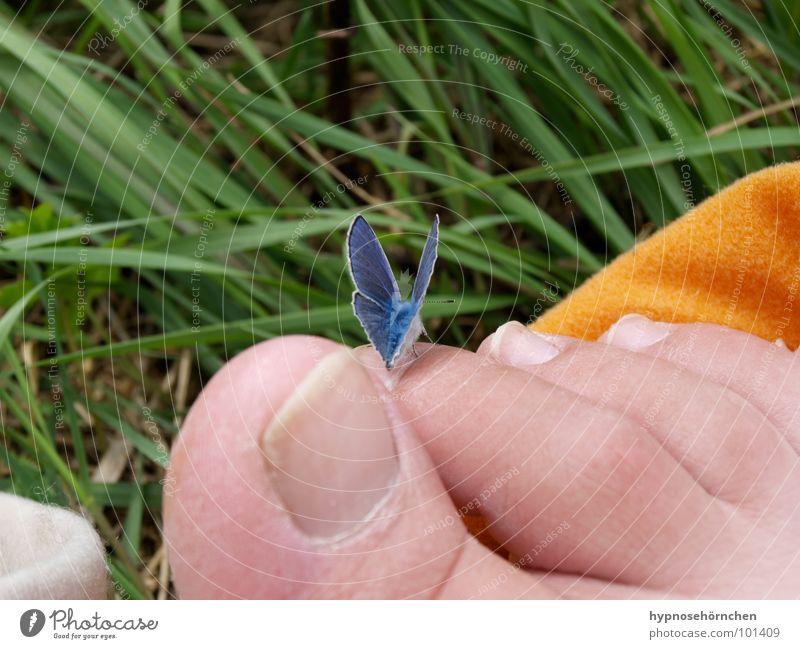 Hmmm, gar nicht kitzlich? Natur grün blau Gras Fuß orange Schmetterling Zehen