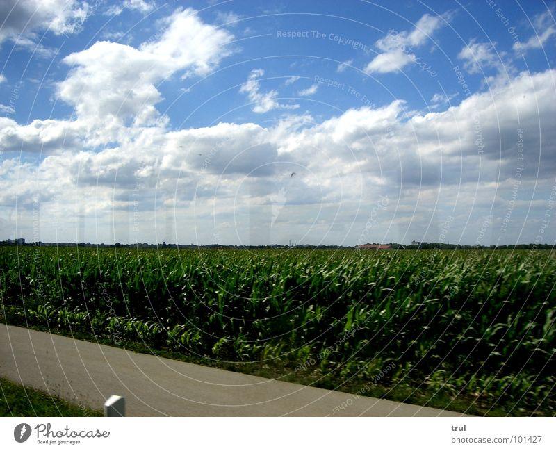 wenn man im bus sitzt... Himmel blau Sommer Wolken Straße Gras Horizont Amerika