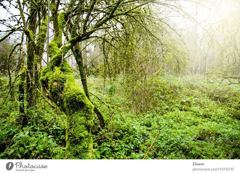 Zauberwald Natur Pflanze grün Baum Landschaft ruhig Wald Umwelt Herbst natürlich frisch Idylle Sträucher fantastisch Warmherzigkeit Umweltschutz