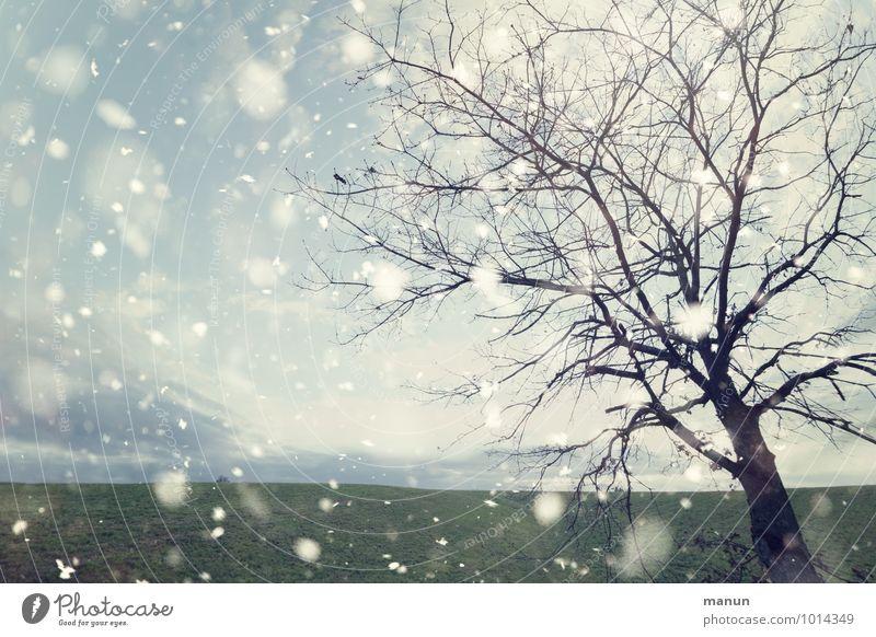 wann wird's mal wieder... Natur Landschaft Winter Wetter Wind Eis Frost Schneefall Baum Wiese Feld Schneeflocke kalt natürlich Farbfoto Gedeckte Farben