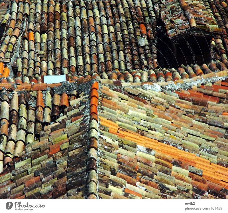 Kroatische Dächer II Dorf Kleinstadt Altstadt bevölkert Haus Architektur Dach Schornstein alt historisch viele orange rot Idylle Dachfirst Kroatien Südeuropa