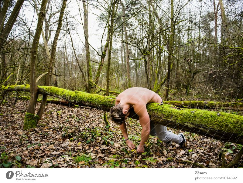 Naturverbunden Mann Pflanze grün Baum Erholung Landschaft Wald Erwachsene Umwelt Herbst natürlich liegen träumen maskulin frisch