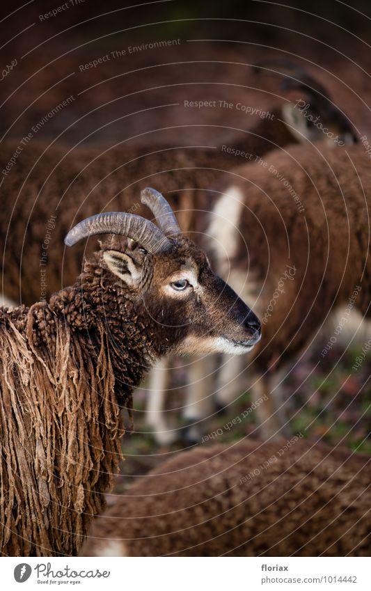 zusammen in der herde Natur weiß Einsamkeit Tier Umwelt Leben Glück Haare & Frisuren braun Zusammensein Zufriedenheit Wildtier beobachten Tiergruppe