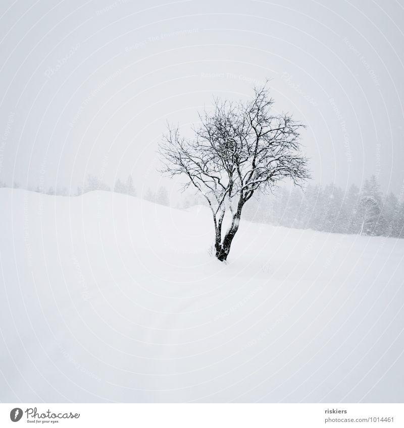 Schneegestöber Natur weiß Baum Einsamkeit Landschaft ruhig Winter schwarz kalt Umwelt Gefühle Stimmung Schneefall Wetter Kraft