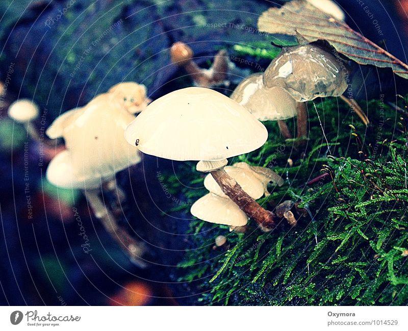 Nass und schleimig Natur grün weiß Wald Umwelt Herbst Holz braun nass Pilz saftig Gift Pilzsucher