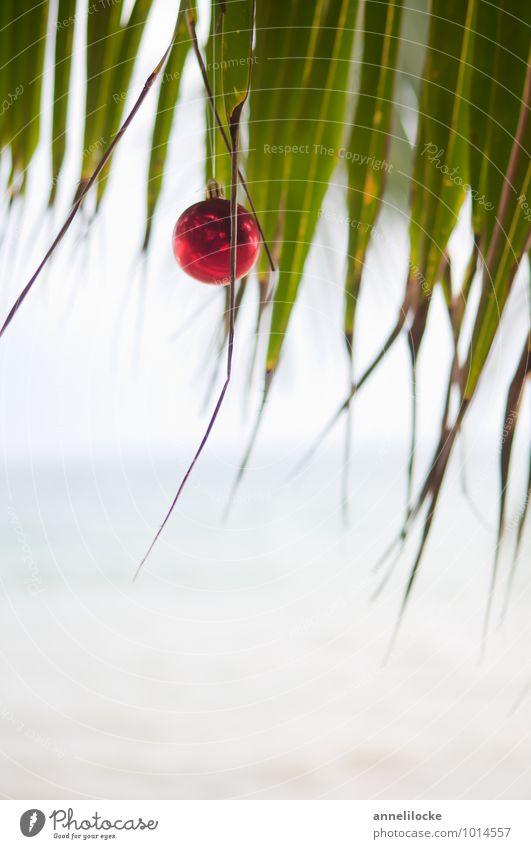 Kompromiss Ferien & Urlaub & Reisen Tourismus Ferne Sommerurlaub Winterurlaub Umwelt Natur Klimawandel Pflanze Baum exotisch Palme Palmenwedel Palmenstrand