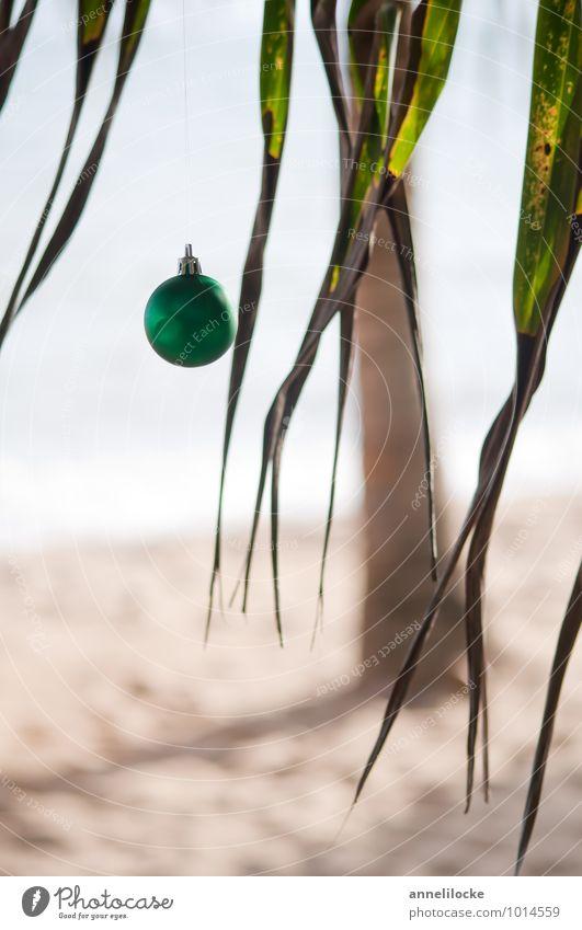 Weihnachtspalme Natur Ferien & Urlaub & Reisen Weihnachten & Advent Sommer Baum Meer Blatt Freude Strand Ferne Küste Feste & Feiern Tourismus Insel