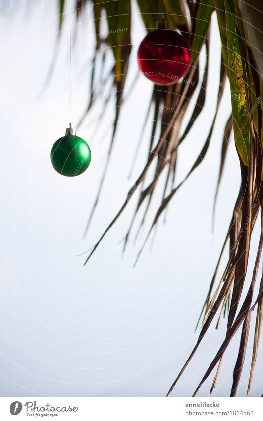 Oh Palmenbaum Natur Ferien & Urlaub & Reisen Pflanze grün Baum Meer rot Strand Ferne Küste Tourismus Sommerurlaub hängen Christbaumkugel Klimawandel